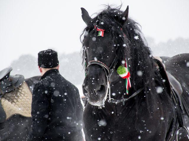 Komperdell hestedækken